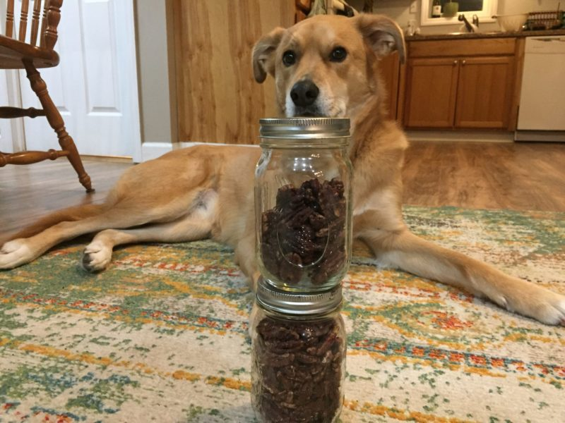Xena in front of pecans straight on